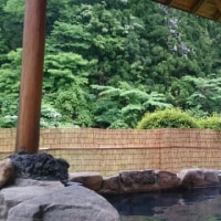 妙雲寺のぼたん祭り
