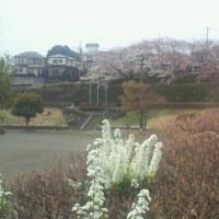 桜のトンネルin東林間 住宅街にある公園とバーベキューのお店『東林バーベキュー』