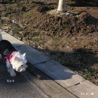遠出の初散歩