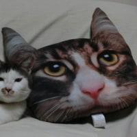 本物の猫はどれだ。