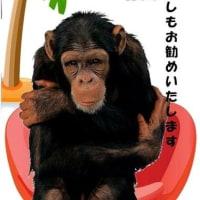 ココナッツの栄養を丸ごと!! エクーアのココナッツバターで元気になりたいモモパンパン