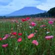 富士山と花の都公園、忍野村,河口湖