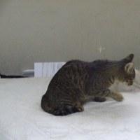 猫風邪の相談