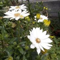 ♪~白色の花~♪