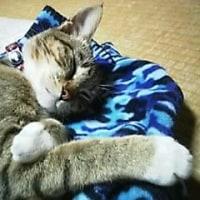 ものすごい爆睡