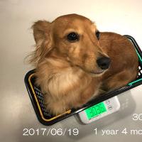 「ニコ」今日で1歳四ヶ月、そしてドッグサロンへ!