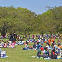 国営昭和記念公園 春の風景、ネモフィラとチューリップ