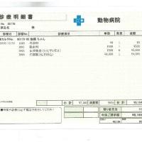 伽羅の肝炎&糖尿病日記(10)