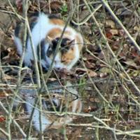 猫に近づいてきた水鳥