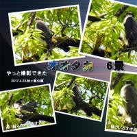 秋ヶ瀬公園でコサメビタキと出会った(108番目の出会い)