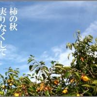 俳句写真1524 柿の秋