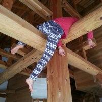 木のトレーニング