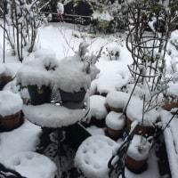 朝から大雪