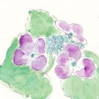 紫陽花を描きました