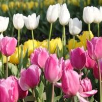 南国(指宿)からの花だより‥④ 【ひで某】