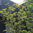 住まいの外構(庭園)エクステリア工事・・・要塞の佇まいをバランスよく「家」との距離感を調整しながら、風景イメージの整理、庭の効能がLDKや和室、個室、パブリックエリアからの印象も変化させますから。