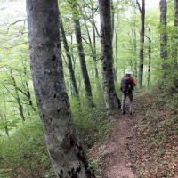 サンカヨウ咲く大万木山