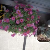我が家の植物