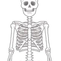 現代人は肋骨が動いていない