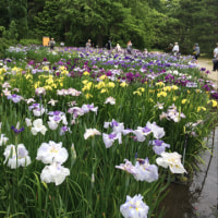 京都の初夏 ~ 京都府立植物園のハナショウブ