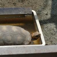 遊亀公園付嘱動物園 (山梨県甲府市) もうすぐ開園100周年