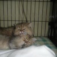 子猫達とマンゴーの新しい家族・・・・。