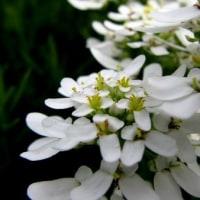 Yさん宅 庭の お花