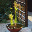 日本の美を伝えたい―鎌倉設計工房の仕事 282