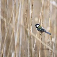おかざき自然体験の森の小鳥達