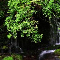 雨降りの元滝