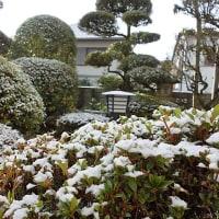 朝から雪化粧~