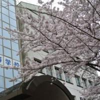 娘の高校の入学式に参加しました。学校の桜も満開でした。