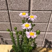ちょっと珍しい花