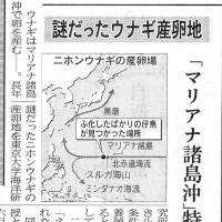関西の孔子-楊震