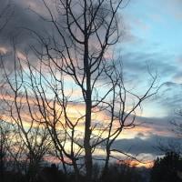 枝の向こうの夕景