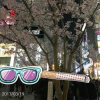 新宿  サクラのハナが咲いたよ