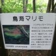 獅子ヶ鼻湿原
