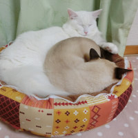 新しいベッドで
