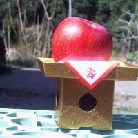 この、リンゴの写真は、オラの個人写真なのだ。無断盗用するなよ~~~(σ≧▽≦)σ