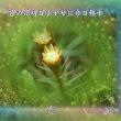 フォト575qs1403『 苔の花明日まかせに今日熱中 』