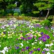 鶴舞公園-菖蒲池