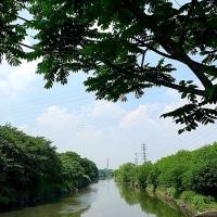 新緑の芝川