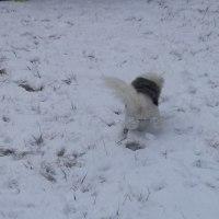 雪積もったょ~
