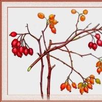 スズバラの果実