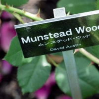 Munstead Wood