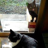 窓の内外。