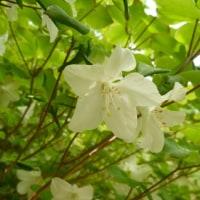 【ガイド】奥多摩の春をめぐる⑤/川苔山1