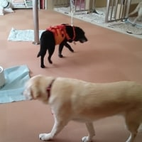盲導犬協会へ