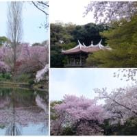 春・新宿御苑