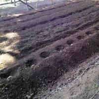 4月25日・短形自然薯を栽培することになりました!